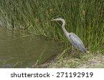 great blue heron  ardea... | Shutterstock . vector #271192919