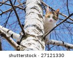 a cat on a tree looking down. | Shutterstock . vector #27121330