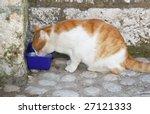 homeless cat drinking milk on a ... | Shutterstock . vector #27121333