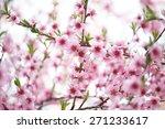 sakura   Shutterstock . vector #271233617