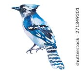 blue jay isolated on a white... | Shutterstock . vector #271349201