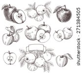 sketches and engravings apples... | Shutterstock .eps vector #271384505