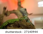 """""""chinese water dragon"""" ...   Shutterstock . vector #27140944"""