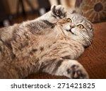 Stock photo scottish fold cat 271421825