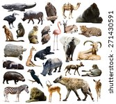 hyena   gorilla and other... | Shutterstock . vector #271430591