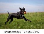 Stock photo black dog running in green grassy field with orange ball 271532447