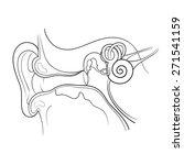 ear anatomy outline vector... | Shutterstock .eps vector #271541159