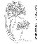 Botanical Agapanthus Flowers...