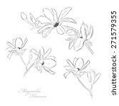 magnolia flowers | Shutterstock .eps vector #271579355