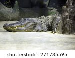 Mississippi Alligator...