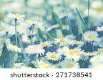 daisy flowers   spring daisy... | Shutterstock . vector #271738541