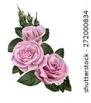 three pink roses   Shutterstock . vector #272000834