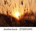 sunset sunset light and grass...   Shutterstock . vector #272091491