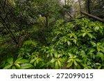 tropical rain forest | Shutterstock . vector #272099015