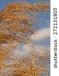 close up photo lot of gold grass | Shutterstock . vector #272131805