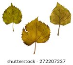 collection of autumn leaves on... | Shutterstock .eps vector #272207237