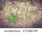 weeds growing on dry cracked... | Shutterstock . vector #272386709