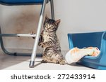 Stock photo adorable little grey kitten balancing upright using the cross bar of a chair as a support as it 272433914
