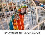 Big Colorful Parrot In The...