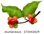 coffee branch. photo realistic... | Shutterstock .eps vector #272442029