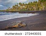 Turtle Resting In Punalu'u...