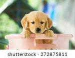 pet | Shutterstock . vector #272875811