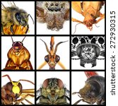 Insects.close Up.