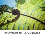 Unravelling Fern Frond Closeup...
