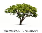 Stock photo trees isolated on white background tropical trees isolated used for design advertising and 273030704