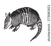 armadillo hand drawn vector...
