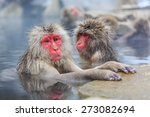 Snow Monkeys In A Natural Onse...