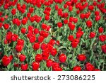 large group of red tulips in... | Shutterstock . vector #273086225