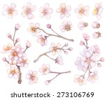 set of apricot branches and... | Shutterstock .eps vector #273106769