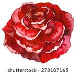 Stock vector watercolor red rose 273107165