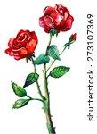 Stock vector watercolor red rose 273107369