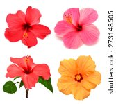collection of colored hibiscus... | Shutterstock . vector #273148505