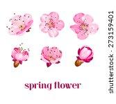 sakura flowers. spring... | Shutterstock .eps vector #273159401
