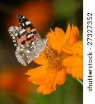 Butterfly On Orange Flower ...