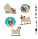 pug dog face and postures | Shutterstock . vector #273342077