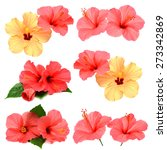 collection of colored hibiscus... | Shutterstock . vector #273342869