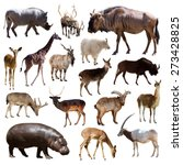 Small photo of Set of blue wildebeest, hippo and other Artiodactyla mammal animals over white background