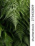green fern | Shutterstock . vector #273432809