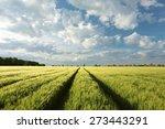 Spring Landscape  Field Of...