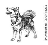 siberian husky dog. hand drawn. ... | Shutterstock .eps vector #273445211