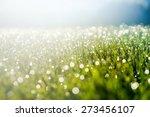 Abstract Natural Grass...