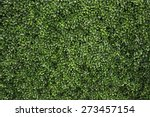green tree wall for closeup... | Shutterstock . vector #273457154