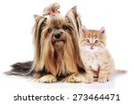 Stock photo cute pets isolated on white 273464471