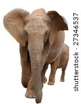 elephant and calf walking down... | Shutterstock . vector #27346537