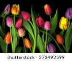 Vibrant Colorful Tulips...