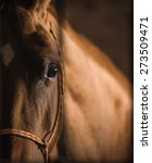 Closeup Of A Horse Head  With...
